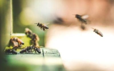 La biodiversité du BW en danger: compte-rendu du forum de la biodiversité du BW