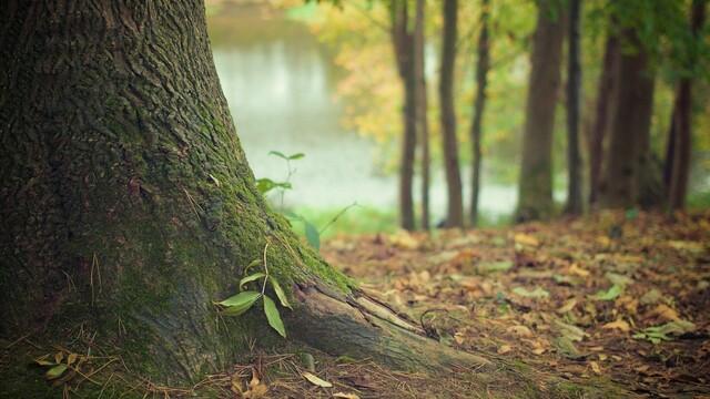 Notre avis sur le projet de liaisons du maillage écologique en Brabant wallon