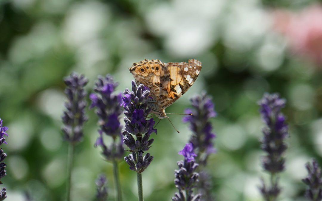 Quelques astuces pour ramener la biodiversité dans notre jardin